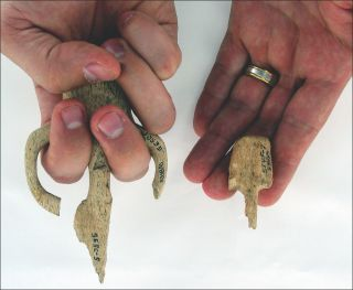 Atlatl hand grips found at Par-Tee varied greatly in size.