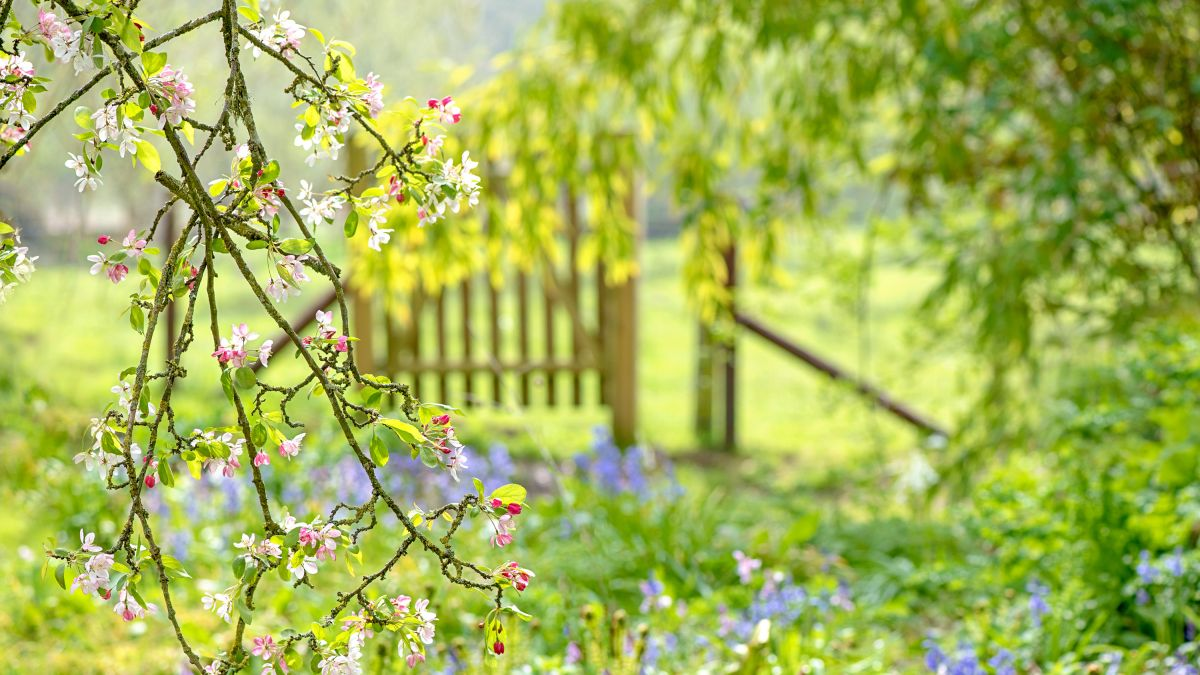 These top gardening tips for spring weather changes will help your plants to cope with unpredictable weather