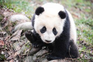 panda preserve