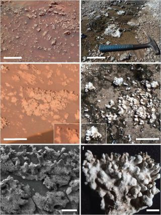 possible biosignatures on mars