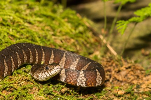 Facts About Water Snakes Live Science
