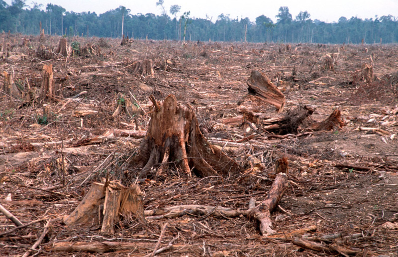 Deforestation: Facts, Causes & Effects | Live Science