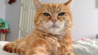 cat abandoned after 18 years