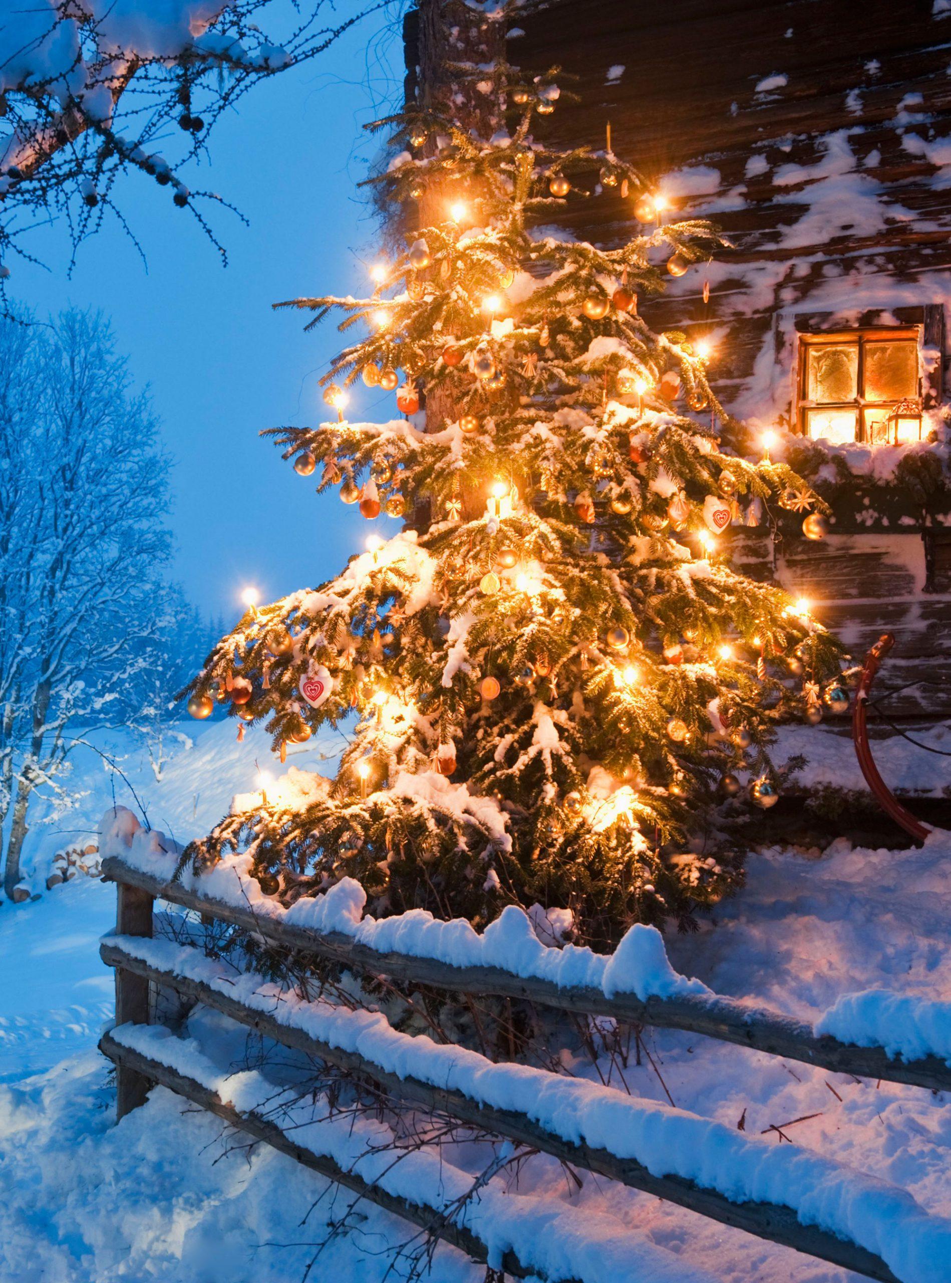 christmas tree outside house photo