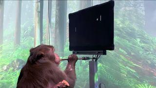 Neuralink monkey playing Pong