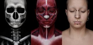 skeleton, muscles, face, anatomy