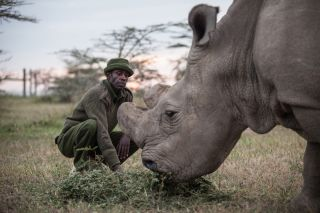 Head caretaker Mohammed Doyo feeds Sudan, the last male northern white rhino left on the planet, on June 12, 2015. Sudan lives in a 10-acre enclosure at Ol Pejeta Conservancy in Kenya, where he is protected from poachers 24 hours a day by armed guards.