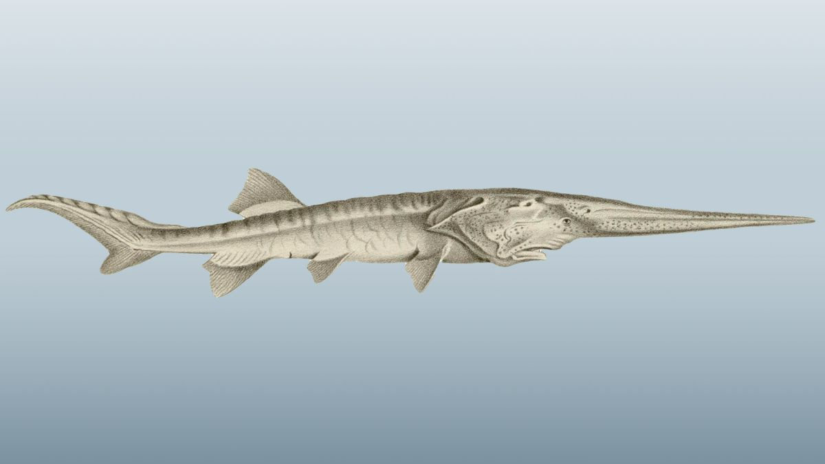 One of World's Largest Freshwater Fish May Be First Official Extinction of 2020
