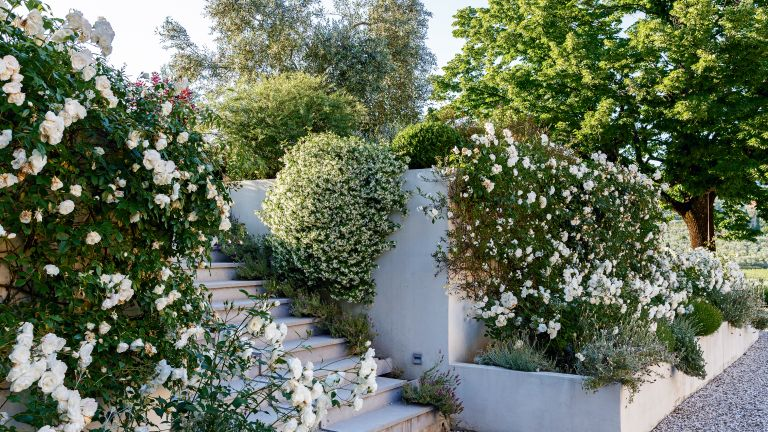 Carol Klein's pruning tip, cutting a box hedge, bushes in a well-kept garden