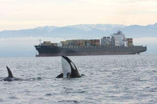 Orca with freighter