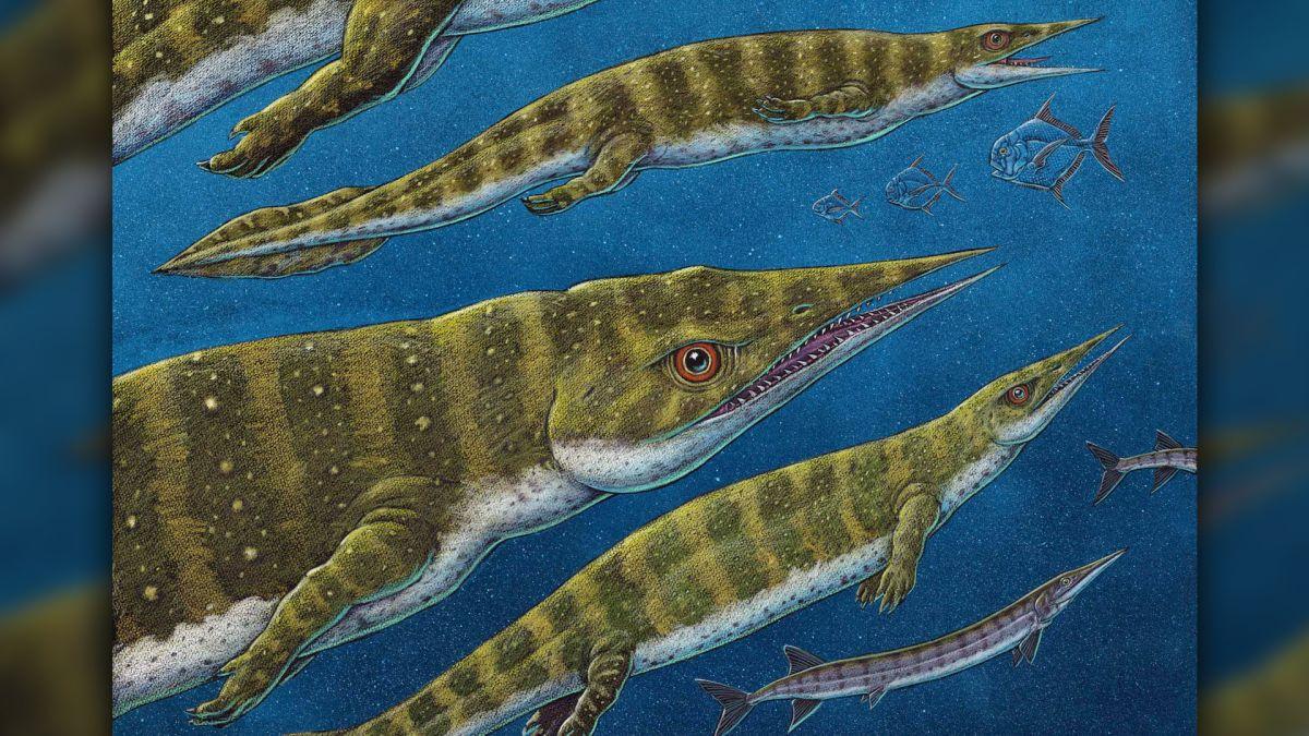 Fearsome Triassic 'ocean lizard' was a tweezer-nosed weirdo
