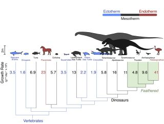 Comparative growth rates in vertebrates, including dinosaurs.