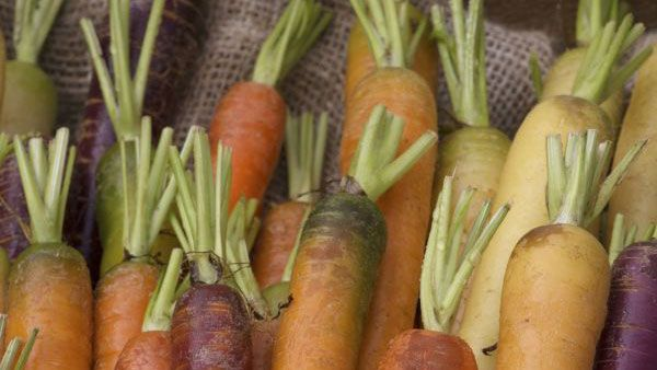 pickle recipe: carrots that can be used in a pickle