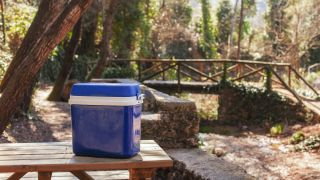 best camping coolers: cool box in woods