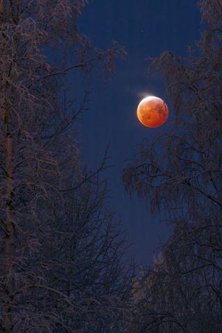 Bloodborne © Keijo Laitala
