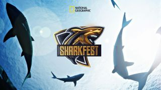 National Geographic Sharkfest