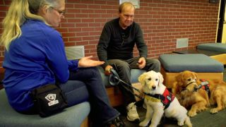 Two service dogs for PTSD sat with their owner and trainer