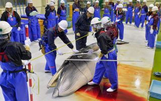 Japanese Whalers