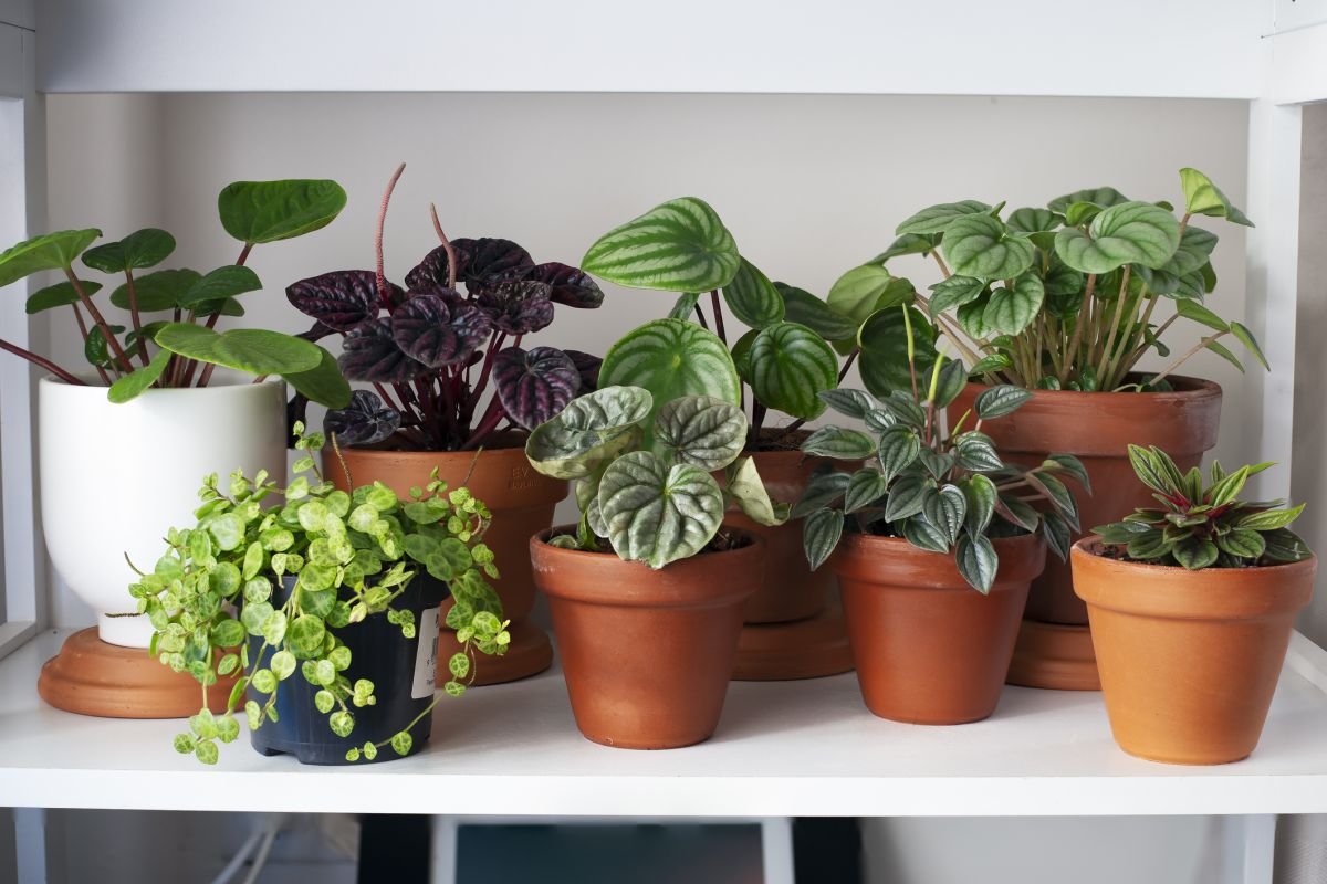 These Are The Most Popular Instagram Plants Of 2021