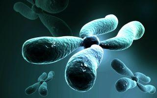 An illustration of a chromosome