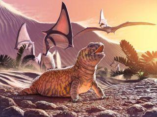 Brazil lizard illustration