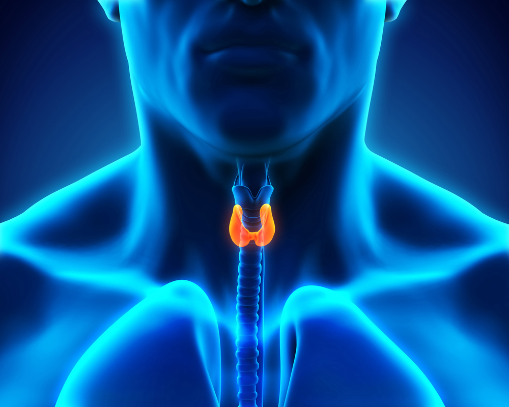 Thyroid Gland Facts Function Diseases Live Science