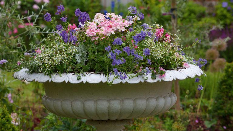 Thriller, spiller, filler –a garden container with flowers