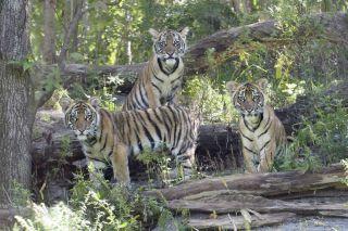 extinction, conservation, Asian species