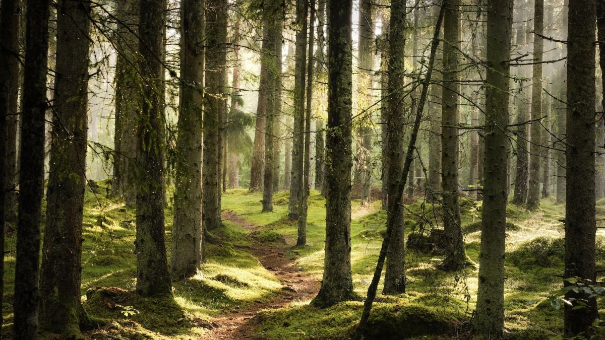 What is forest bathing – and why is it good for us?