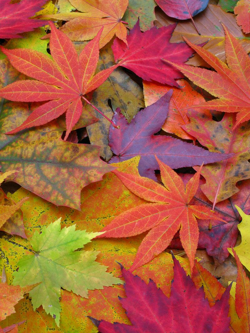 - Image Gallery: A Rainbow Of Fall Leaves Live Science