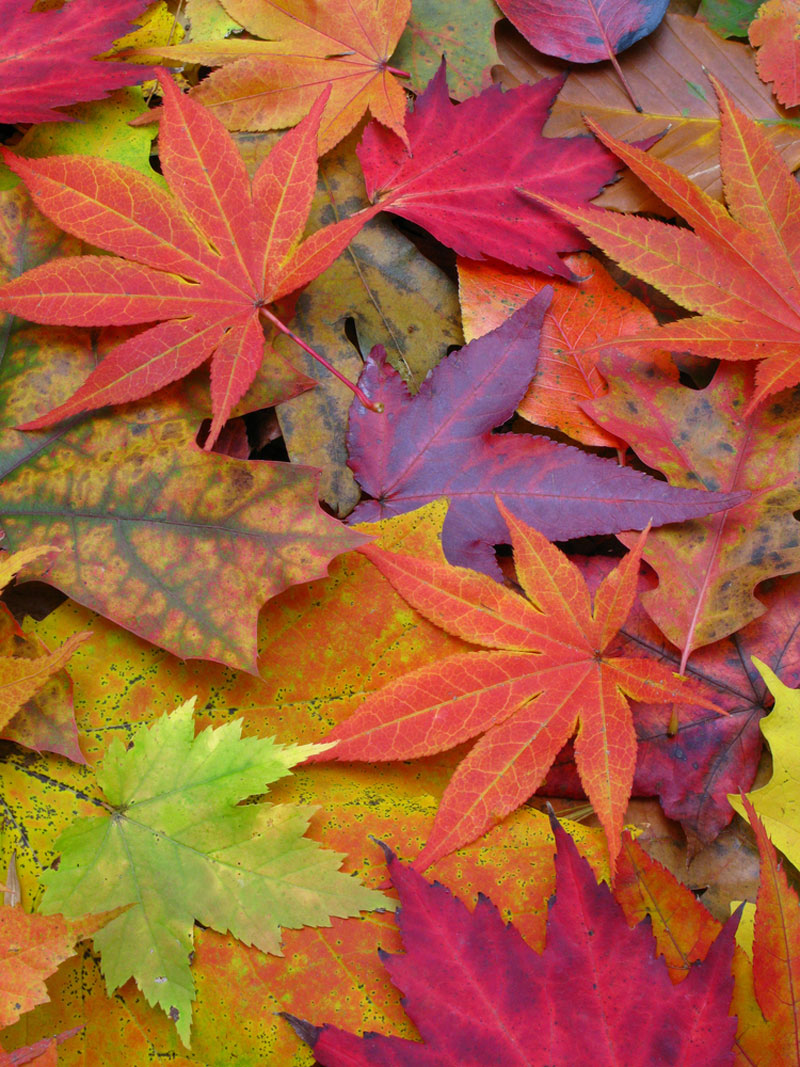 Image Gallery A Rainbow Of Fall Leaves Live Science