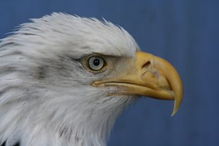 Inspired by the eyes of hawks, eagles and other birds of prey, NASA scientists invented technology that was eventually developed into sunglasses that block harmful ultraviolet radiation.