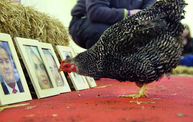 Who knew that chickens were so bright?! This week on the super-cute animal show two clever hens
