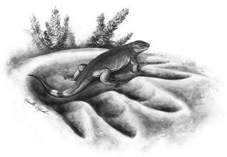 new caseid species sits in footprint