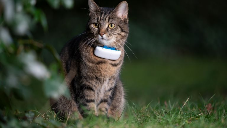 Ever wondered where your cat goes? You need this GPS Tracker!