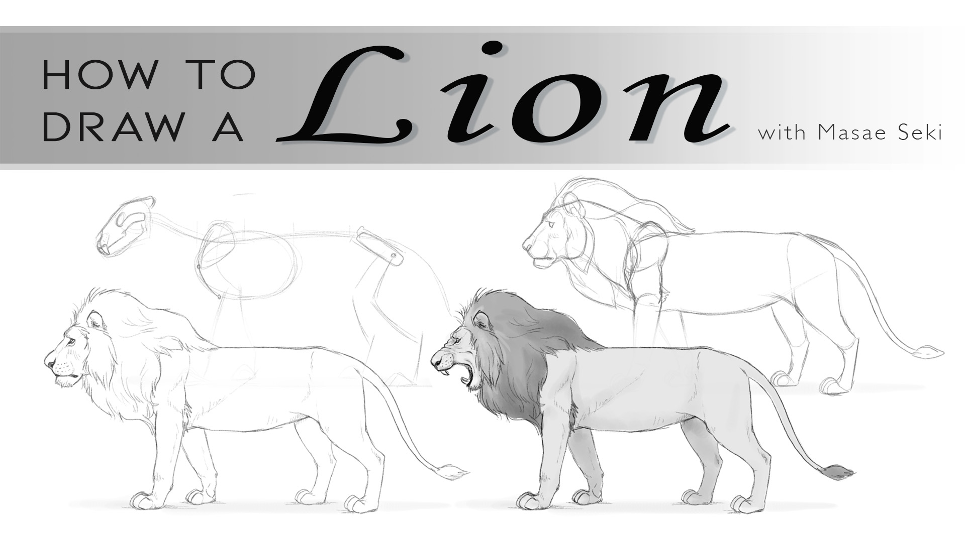 How To Draw A Lion Creative Bloq