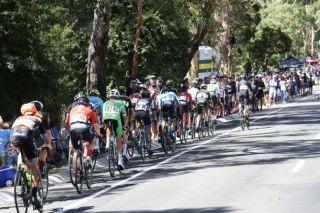 The elite men's road race at the 2019 Australian national championships