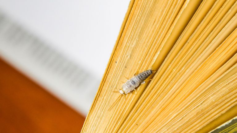 How to get rid of silverfish - silverfish on book - Getty