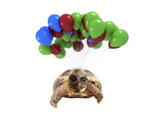 Tortoise wearing aviator glasses flies with the aid of many balloons