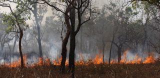wildfires, wild fires, bushfires, predators, fauna