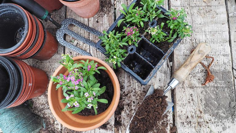 compost vs mulch: pots for planting with compost