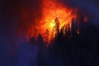 wildfire-wallow-arizona-110614