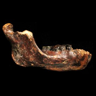 Ancient Human Fossil - Penghu 1