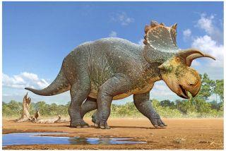 Crittendenceratops krzyzanowskii dinosaur