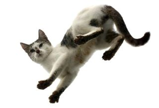 Why Do Cats Land On Their Feet Live Science