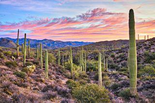 The Sonoran Desert near Phoenix, Arizona.