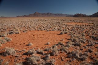 Fairy circles in the Namib Desert.
