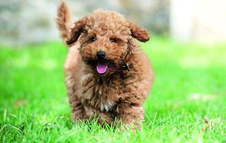 In C5's latest doggy series the focus is on the first weeks of a pup's life.