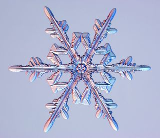 stellar dendrites, snowflakes, snow crystals, images of snow crystals, what snowflakes look like, snow crystal photographs, what snow looks like, snow flakes pictures, photographing snow crystals, snowflake images