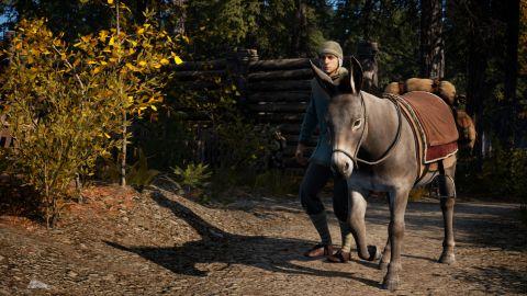 Walking the donkey